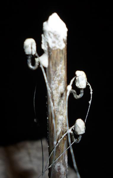 Диорамы и виньетки: Зима 43-го, фото #13