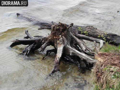 Технологии: Заболоченный берег, фото #24